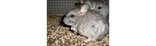 COBAYAS Y CHINCHILLAS